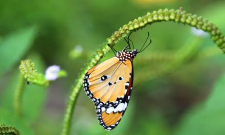 Transformarea fluturelui in 3 acte!