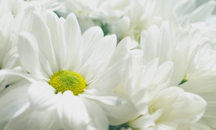 Iti plac florile albe? O florarie online te invata cand sa le daruiesti persoanelor dragi